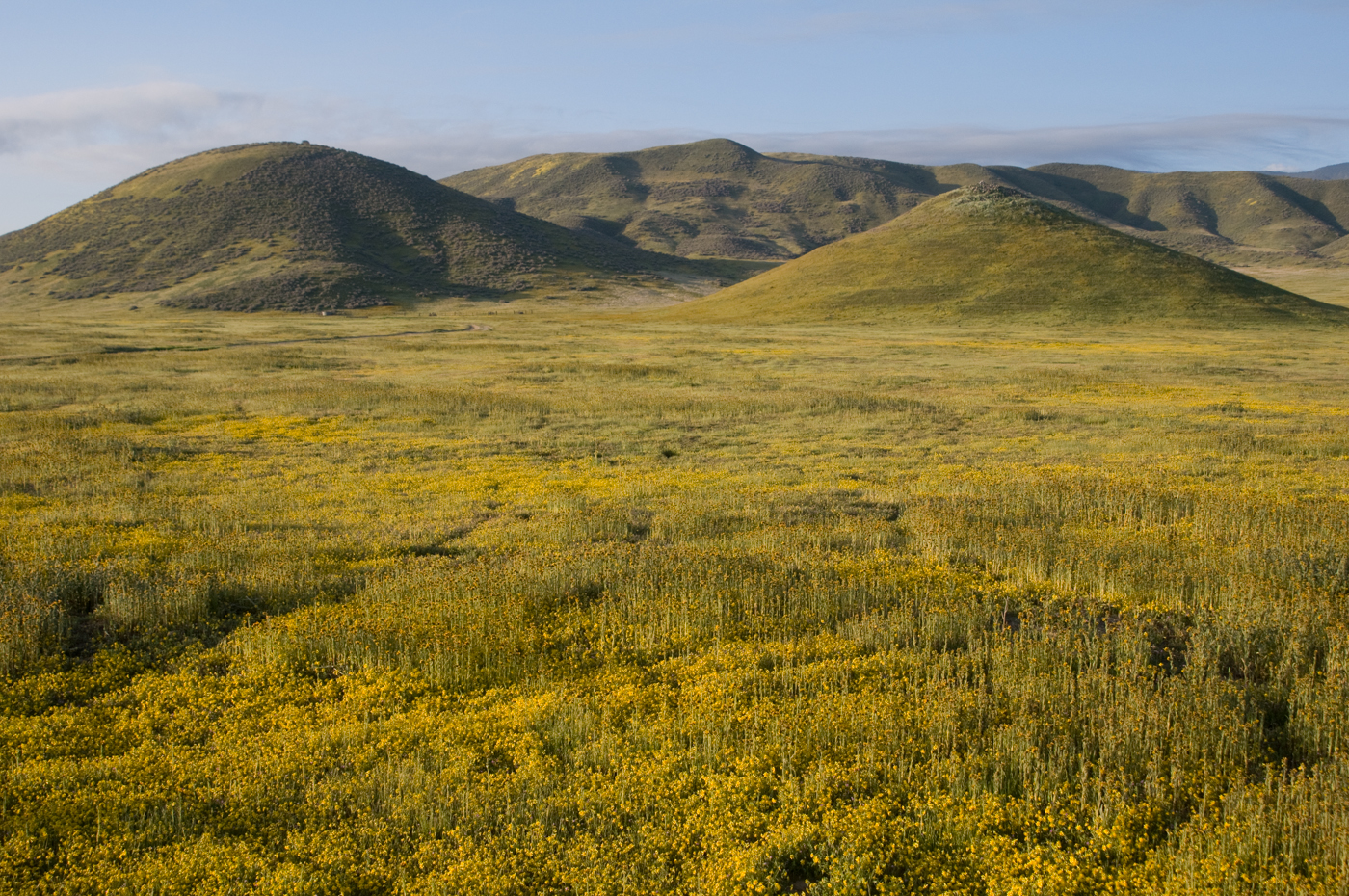 Carrizo Plain in bloom. Photo by Stuart Wilson.