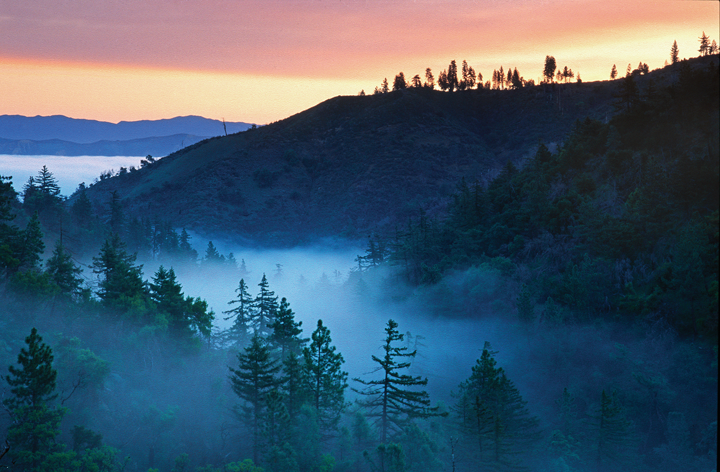 Fog on Figueroa Mountain. Photo by Stuart Wilson.